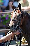 June 7, 2014: Kid Cruz, Irad Ortiz Jr. up, wins the 4th running of the Easy Goer Stakes at Belmont Park , Elmont, NY ©Joan Fairman Kanes/ESW/CSM