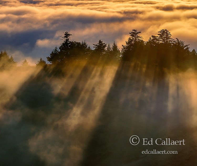 Sunset, Coastal Fog, Bolinas Ridge, Mount Tamalpais State Park, Golden Gate National Recreation Area, Marin County, California