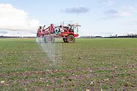 Applying liquid nitrogen to winter barley - Norfolk, February