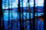 Abstract exposure of Netarts Bay and Netarts Spit taken through Alder trees with camera in motion.  Near Oceanside, Oregon and Cape Lookout State Park where the spit may be accessed for hiking.