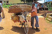 In Tokapal, Chhattisgarh, India the hens are carried to the market hung to the bike