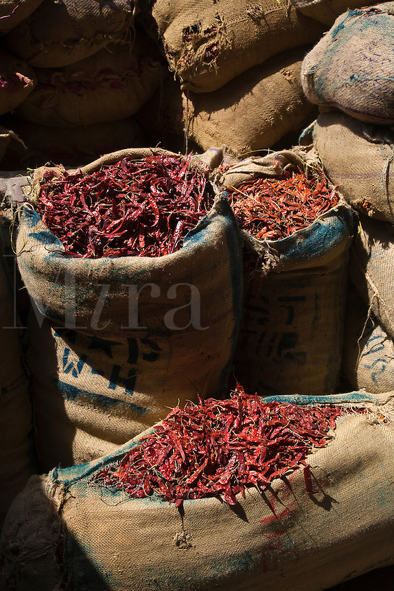 CHILI PEPPERS are sold wholesale in the SPICE MARKET of CHANDNI CHOWK OLD DELHI - INDIA