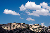 Spanien, Andalusien, Olivenhaine bei Priego de Cordoba