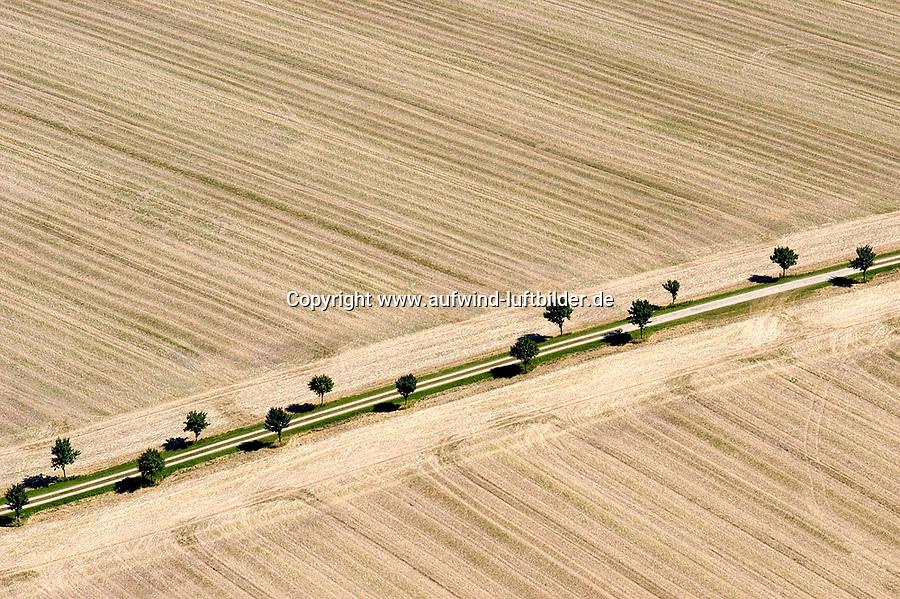 Deutschland, Schleswig- Holstein, Schwarzenbek, Ernte, abgeerntetes Kornfeld, Feldweg, Baumreihe