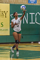 1 November 2015: SUNY College at Old Westbury Panther Outside Hitter Gerlande Lucas, a Senior from Rosedale, NY, in action against the Yeshiva University Maccabees at SUNY Old Westbury in Old Westbury, NY. The Panthers edged out the Maccabees 3-2 in NCAA women's volleyball, Skyline Conference play. Mandatory Credit: Ed Wolfstein Photo *** RAW (NEF) Image File Available ***