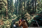 Old growth forest, Olympic National Park, Olympic Peninsula, Washington State, Pacific Northwest, U.S.A.,.