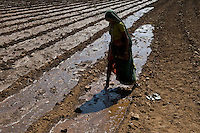 "Südasien Asien Indien IND Madhya Pradesh , Bewaesserung eines Feldes. -  Landwirtschaft xagndaz | .South Asia India , water and agriculture, irrigation of field .  -  farming .| [ copyright (c) Joerg Boethling / agenda , Veroeffentlichung nur gegen Honorar und Belegexemplar an / publication only with royalties and copy to:  agenda PG   Rothestr. 66   Germany D-22765 Hamburg   ph. ++49 40 391 907 14   e-mail: boethling@agenda-fototext.de   www.agenda-fototext.de   Bank: Hamburger Sparkasse  BLZ 200 505 50  Kto. 1281 120 178   IBAN: DE96 2005 0550 1281 1201 78   BIC: ""HASPDEHH"" ,  WEITERE MOTIVE ZU DIESEM THEMA SIND VORHANDEN!! MORE PICTURES ON THIS SUBJECT AVAILABLE!! INDIA PHOTO ARCHIVE: http://www.visualindia.net ] [#0,26,121#]"