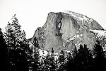 Yosemite, Half Dome in Winter with snow and trees.<br /> Mariposa County Fair - Award Winning Images<br /> Fine Art Landscape  <br /> Photo by Joelle Leder Photography Studio ©