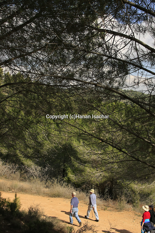 Israel, Jerusalem Mountains, Mount Eitan