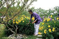 HB05-003x  English Cottage Garden - picking day lilies  - Hemerocallis spp
