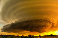 A spectacular sight in the light of the setting sun, this highly striated supercell thunderstorm is illuminated by the golden orange glow of sunset over Morris county Kansas on June 19th, 2011. This storm produced hail to baseball size along with a small tornado over open country.