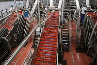 ITALY, Parma, Basilicanova, tomato canning company Mutti s.p.a., founded 1899, fresh plum tomatoes are conserved as canned tomato, pulpo, passata and tomato concentrate, washing unit / ITALIEN, Parma, Basilicanova, Tomatenkonservenfabrik Firma Mutti spa, die frisch geernteten Flaschentomaten werden zu Dosentomaten, Passata und Tomatenmark verarbeitet und konserviert, alles 100 Prozent Italien, finale Wasch- und Sortieranlage