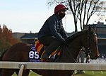 Mother Earth, trained by trainer Aidan P. O'Brien, exercises in preparation for the Breeders' Cup Juvenile Fillies Turf at Keeneland Racetrack in Lexington, Kentucky on November 5, 2020.