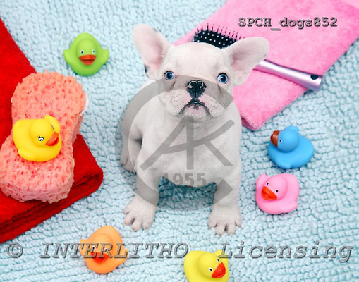 Xavier, ANIMALS, dogs, photos, SPCHDOGS852,#A# Hunde, perros