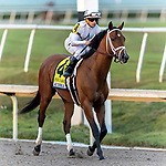 HALLANDALE BEACH, FL - FEB 03: Audible #4 prepares to run and win The $350,000 Holy Bull Stakes (G2) with Javier Castellano in the irons for trainer Todd A. Pletcher at Gulfstream Park on February 3, 2018 in Hallandale Beach, FL. (Photo by Bob Aaron/Eclipse Sportswire/Getty Images)