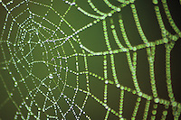 Spider's Web, Cathkin Braes Country Park, Glasgow