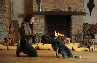 FAO JANET TOMLINSON, DAILY MAIL PICTURE DESK<br /> Pictured: A member of staff trains one of the dogs Monday 14 November 2016<br /> Re: The Dog House in the village of Talog, Carmarthenshire, Wales, UK