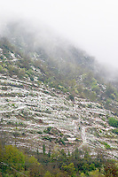 Saint Joseph. Vineyards under snow in seasonably exceptional weather in April 2005. Saint Joseph, Rhone, France, Europe