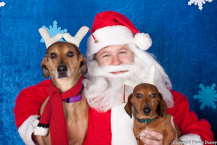 Dogs are photographed with Santa at a fundraiser for Dogs Deserve Better at Pet Pros in Redmond, WA on December 12, 2010. (photo by Karen Ducey)Bambi and Rooney are photographed with Santa at a fundraiser for Dogs Deserve Better at Pet Pros in Redmond, WA on December 12, 2010. (photo by Karen Ducey)