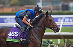 DEL MAR, CA - OCTOBER 31: Ribchester, owned by Godolphin Stable Lessee and trained by Richard A. Fahey, exercises in preparation for Breeders' Cup Mile at Del Mar Thoroughbred Club on {mothname} 31, 2017 in Del Mar, California. (Photo by Scott Serio/Eclipse Sportswire/Breeders Cup)