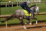 LOUISVILLE, KY - MAY 02: Creator (Tapit x Morena, by Privately Held) works 4 furlongs in :50.6 with exercise rider Abel Flores at Churchill Downs, Louisville, KY, in preparation for the Kentucky Derby. Owner WinStar Farm LLC. (Photo by Mary M. Meek/Eclipse Sportswire/Getty Images)