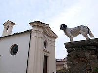 Switzerland. Canton Ticino. Gentilino. A hunting dog on wall close to a catholic church. English setters have a long history as upland gun dogs .Gentilino is 5 km distant from Lugano. 27.12.10  © 2010 Didier Ruef