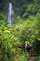 Hiker passes lush greenery on the Pipiwai Trail to Waimoku Falls in the Kipahulu District of Haleakala National Park, Maui