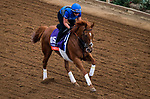 DEL MAR, CA - OCTOBER 30:Wuheida, owned by Godolphin Stable Lessee and trained by Charlie Appleby, exercises in preparation for Breeders' Cup Filly & Mare Turf at Del Mar Thoroughbred Club on October 30, 2017 in Del Mar, California. (Photo by Jon Durr/Eclipse Sportswire/Breeders Cup)