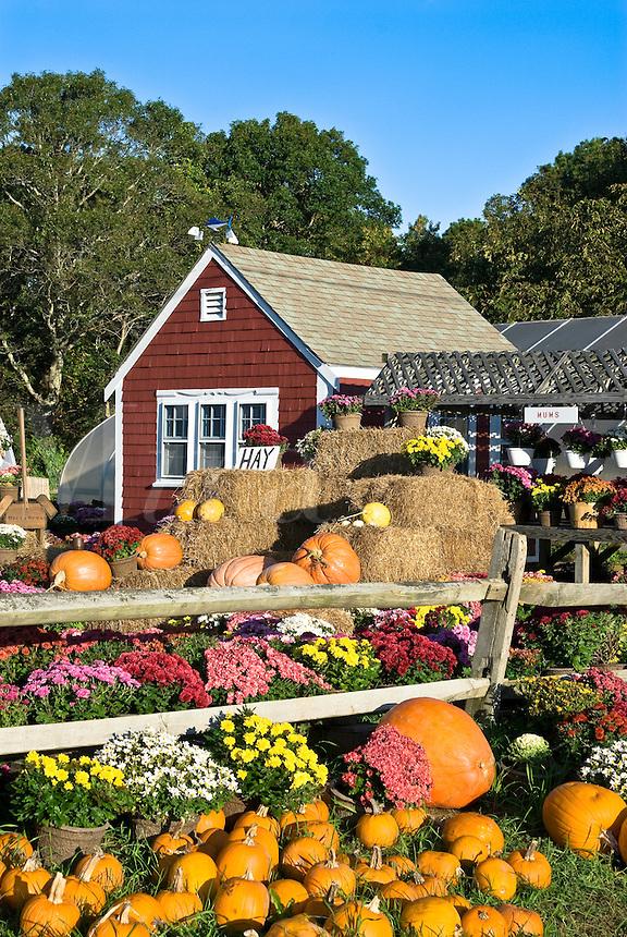 Farm and greenhouse in autumn, Barnstable, Cape Cod, MA