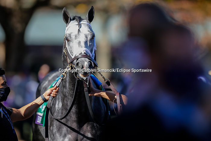 November 7, 2020 : Knicks Go, ridden by Joel Rosario, walks the paddocks before the Big Ass Fans Dirt Mile on Breeders' Cup Championship Saturday at Keeneland Race Course in Lexington, Kentucky on November 7, 2020. Carolyn Simancik/Breeders' Cup/Eclipse Sportswire/CSM