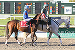 NEW ORLEANS, LA - FEBRUARY 25: Bullards Alley #1, ridden by Marcelino Pedroza, Fair Grounds Handicap race on Risen Star Stakes Day at Fair Grounds Race Course on February 25, 2017 in New Orleans, Louisiana. (Photo by Jarrod Monaret/Eclipse Sportswire/Getty Images)