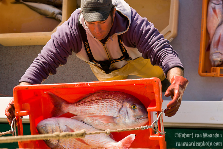 Fisherman bringing in the daily catch in Sagres port in Southwest Portugal.