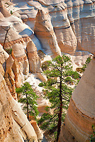 Rock formations and struggling ponderosa pine tree in Tent Rocks National Monument, New Mexico.