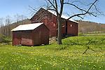 Stopper Barn, Morgan Valley Road, in Spring