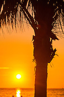 The Orange Palm