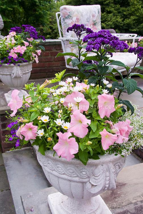 Cement pot container garden of annual petunia, Leucanthemum, Heliotropium Marine heliotrope, bacopa, on stone patio near chair patio furniture, pink and purple color theme, harmonious plantings