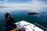 Photographer & southern right whale, Eubalaena australis, Conservation Dependant (IUCN), UNESCO Natural World Heritage Site, Golfo Nuevo, Peninsula Valdes, Chubut, Patagonia, Argentina, Atlantic Ocean
