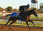 Donjah, trained by trainer Henk Grewe, exercises in preparation for the Breeders' Cup Turf at Keeneland Racetrack in Lexington, Kentucky on November 4, 2020.