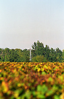 A propeller in the vineyard to stir the air during cool weather to avoid frost damage in the vineyard, view over the vineyard  Chateau Caillou, Grand Cru Classe, Barsac, Sauternes, Bordeaux, Aquitaine, Gironde, France, Europe