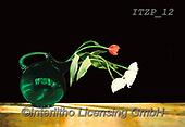 Franco, FLOWERS, BLUMEN, FLORES, paintings+++++,ITZP12,#f#, EVERYDAY