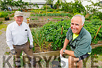 Tommy Sweeney and Frank Houlihan help out in the allotment in Moyderwell, catering for their own allotment as well as for people who cant attend to their own at the moment. <br />  .