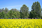 The peloton during Stage 13 of the 2021 Giro d'Italia, running 198km from Ravenna to Verona, Italy. 21st May 2021.  <br /> Picture: LaPresse/Fabio Ferrari | Cyclefile<br /> <br /> All photos usage must carry mandatory copyright credit (© Cyclefile | LaPresse/Fabio Ferrari)