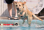 Buck plays at the fourth annual Pooch Plunge at the Carson Aquatic Facility in Carson City, Nev., on Saturday, Sept. 22, 2012. The Parks 4 Paws event helps raise funds for local dog projects..Photo by Cathleen Allison