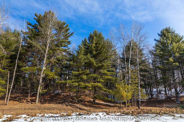 Signs of spring as only patches of snow remain at the edge of a forest in northern Wisconsin.