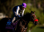 OCT 25:  Breeders' Cup Juvenile Fillies entrant Lazy Daisy, trained by Doug F. O'Neill, under Rafael Bejarano works at Santa Anita Park in Arcadia, California on Oct 25, 2019. Evers/Eclipse Sportswire/Breeders' Cup
