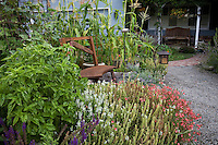 Front yard edible landscape with vegetables, herbs (basil), and flowers