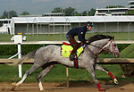 LOUISVILLE, KY - APRIL 25: Lani (Tapit x Heavenly Romance, by Sunday Silence) gallops on the track at  Churchill Downs, Louisville KY in preparation for the Kentucky Derby. Owner Ms. Yoko Maeda, trainer Mikio Matsunaga. (Photo by Mary M. Meek/Eclipse Sportswire/Getty Images)