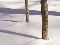 Tree trunks in the snow<br />