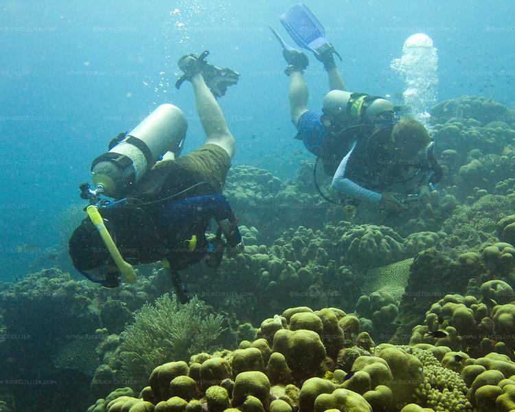 """Diving Bonaire, Netherland Antilles -- Divers explore the reef. (""""Ol' Blue"""" dive site)."""