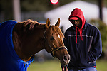 October 25, 2018 : Mind Your Biscuits, trained by Chad Summers, grazes outside the racecourse at Churchill Downs on October 25, 2018 in Louisville, Kentucky. Evers/ESW/CSM